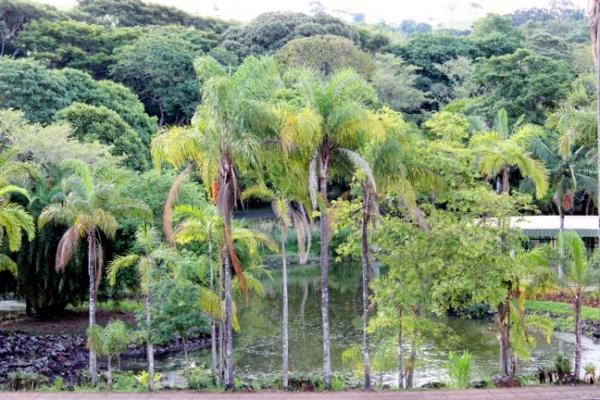 o-parque-e-os-jardins-tiveram-a-concepcao-de-roberto-burle-max-1944405D9F62-5F97-0B09-69F6-FFD3C2A89095.jpg