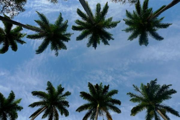 vista-palmeiras-da-alameda1D5445A0-FAA6-5637-7C07-108DC89AAE3A.jpg